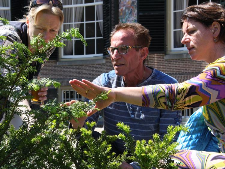Inzamelactie taxussnoeisel - PlantPlezier.nl