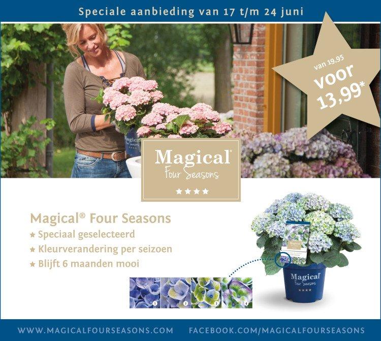 plantplezier - actie - magical hortensia -
