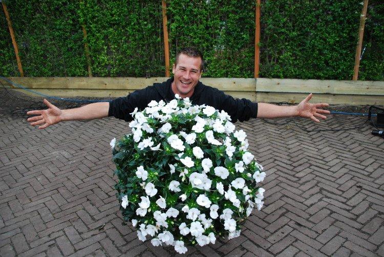 Witte bloemen - PlantPlezier.nl