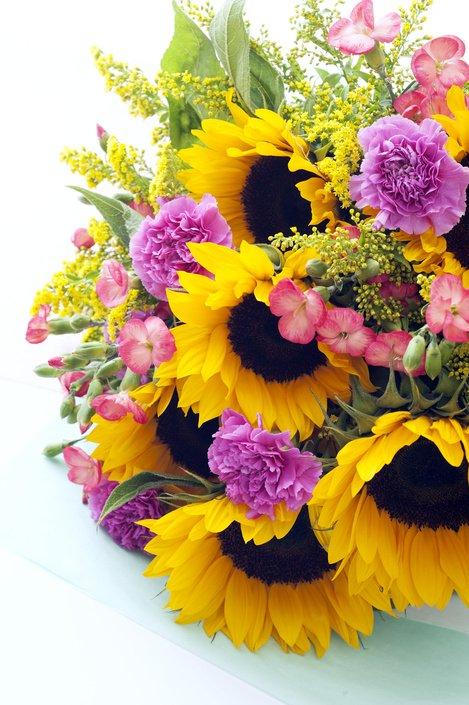 zonnebloem - plaatplezier - ivo putman - plant van de maand