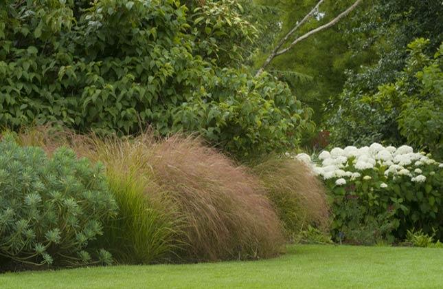 wilde tuin - plantplezier