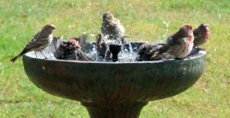 plantplezier - vogels