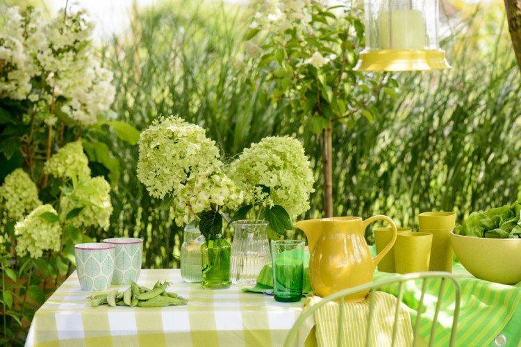 hortensia - groen - plantplezier - plant van de maand - juli