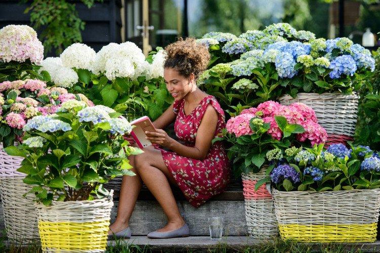 hortensia's op de trap - plantplezier - plant van de maand