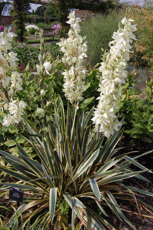 Tuinplant - PlantPlezier.nl