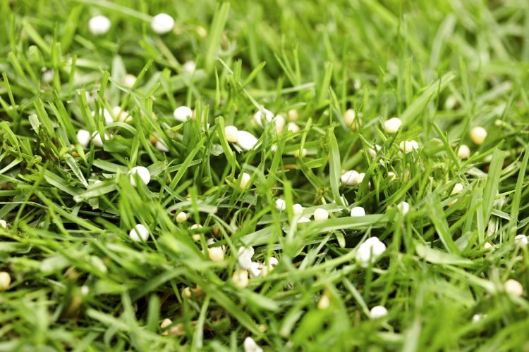 Gras - PlantPlezier.nl