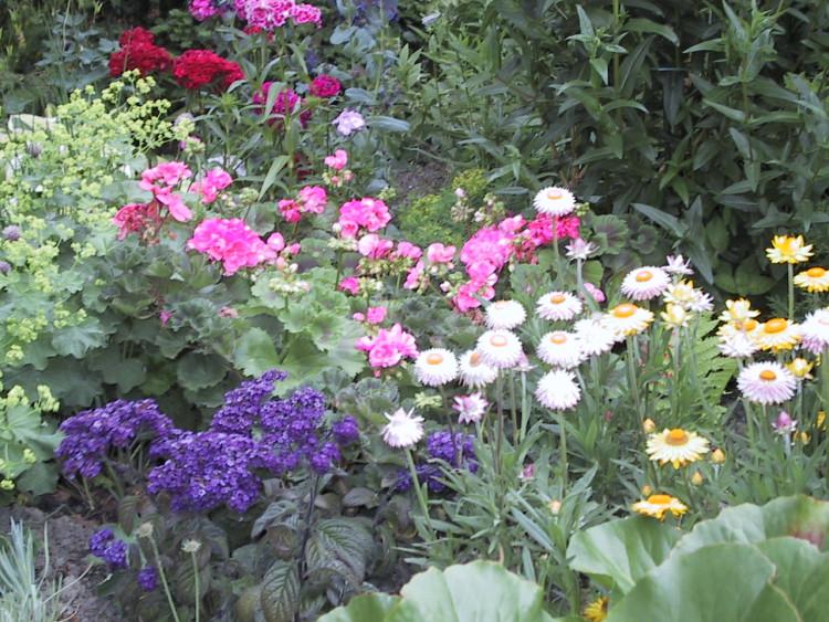 plantplezier - trots op - tuin zonder zevenblad
