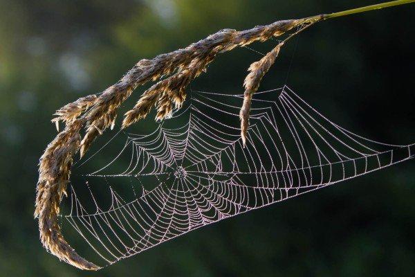 acer - actie - plaatplezier - son en koot - japanese jewel - herfst - bladverkleuring