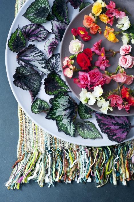 plantplezier - begonia - woonplant - oktober