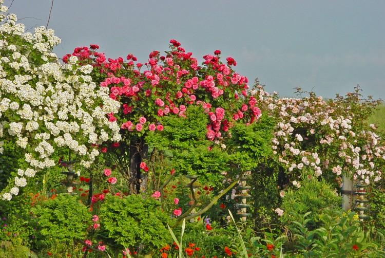 plantplezier - trots op -