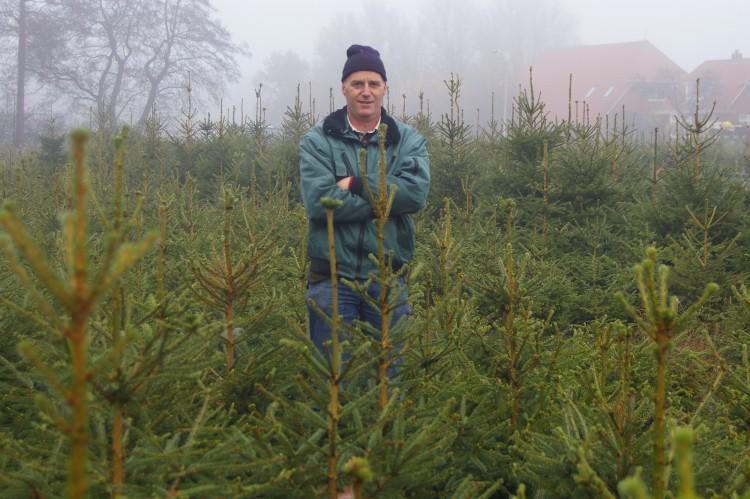 Kerstbomenkwekerij