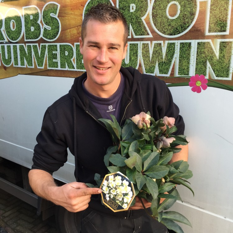 Helleborus Gold Collection - PlantPlezier.nl