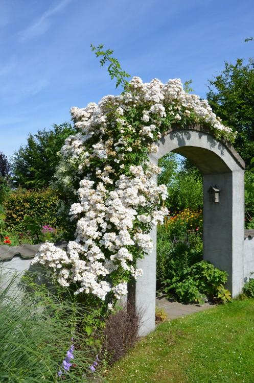 plantplezier - trots op - ons paradijs -