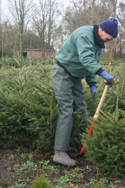 plantplezier - jaap bolhuis - kerstbomen - kwekerij