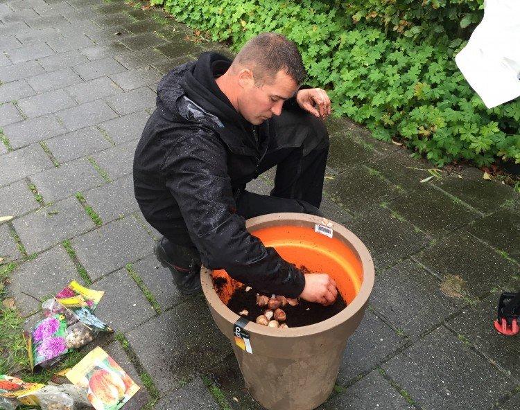 Nu bollen planten - PlantPlezier.nl