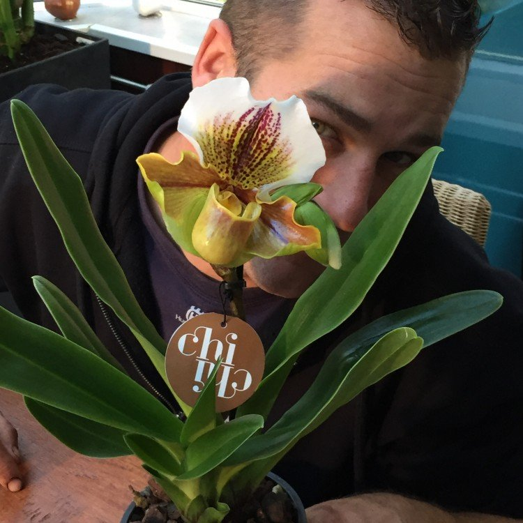 Bijzondere orchidee - PlantPlezier.nl