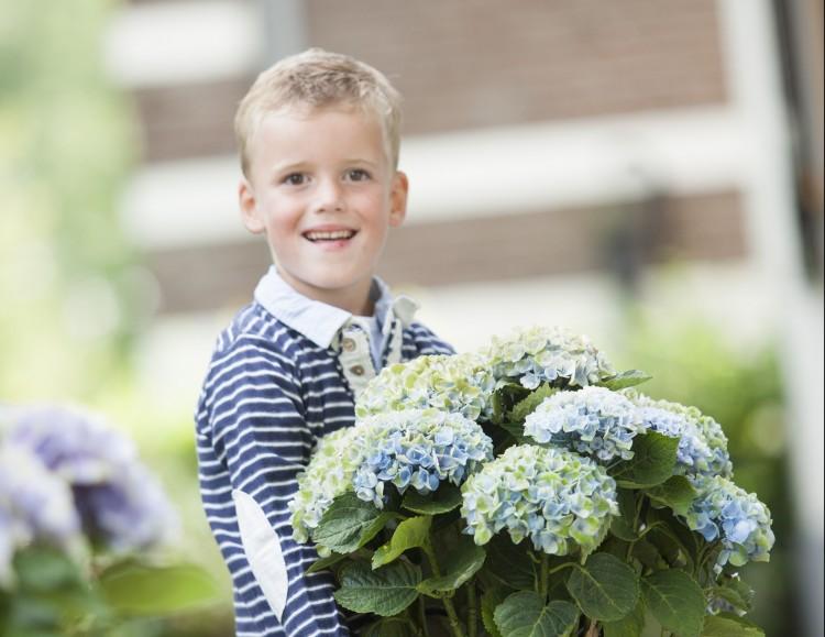 Bescherm je Magical Hortensia in de winter - PlantPlezier.nl