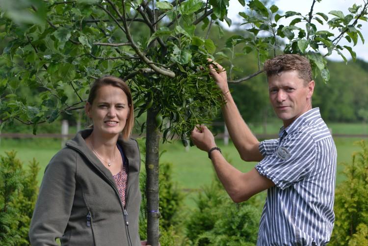 Een kus onder de Mistletoe - PlantPlezier.nl