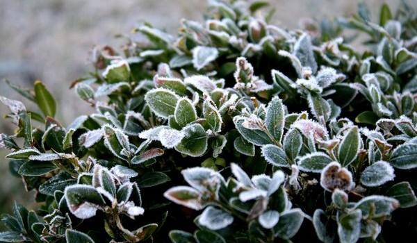 Winter werk - PlantPlezier.nl