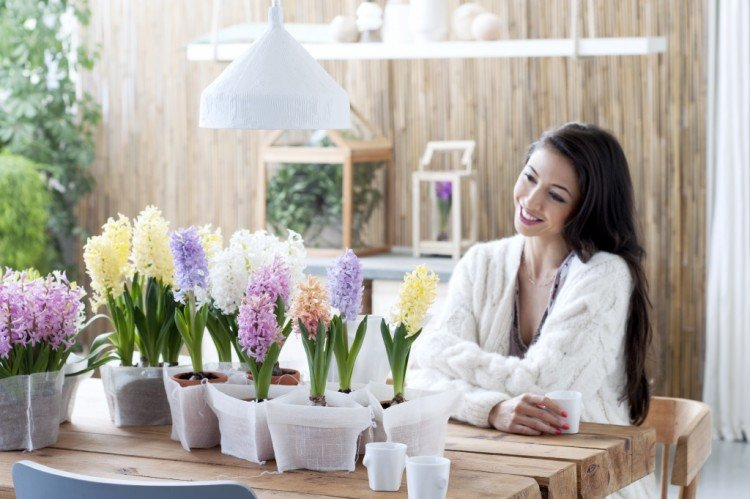 Woonplant december: Hyacint - PlantPlezier.nl