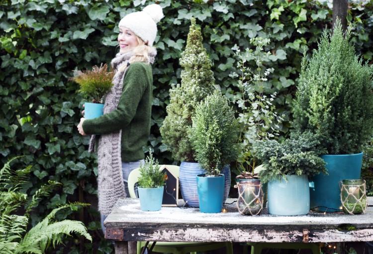 Tuinplant januari: Blauwe coniferen - PlantPlezier.nl