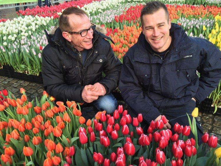 Tulpen uit Amsterdam - PlantPlezier.nl