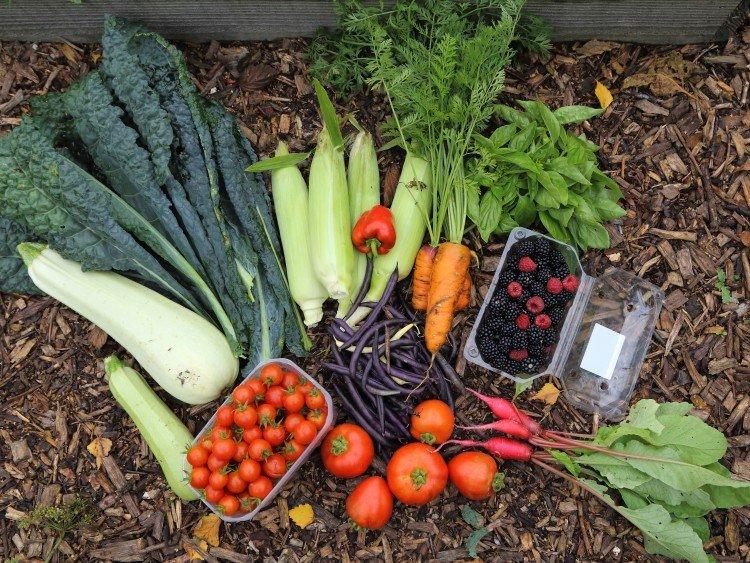 Vera - plantplezier - eetbare bostuin - trots op