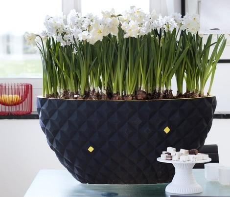 Woonplant februari: Narcis - PlantPlezier.nl