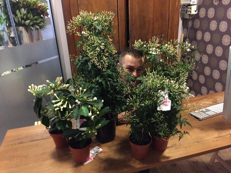 ivo - plantplezier - geurende bloemen - actie - valentijn