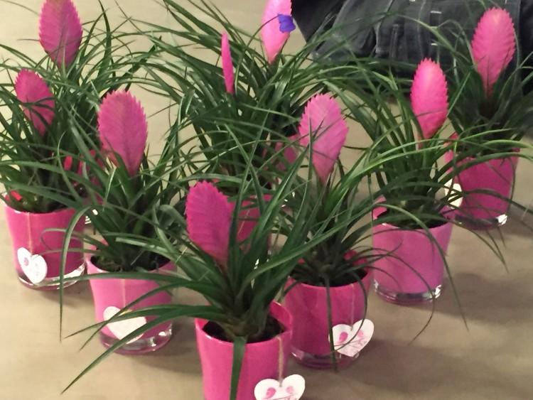 ivo - plantplezier - tilantia - actie - valentijn