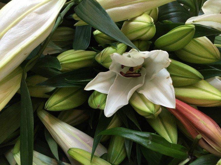plantplezier - lelie - actie - valentijn -