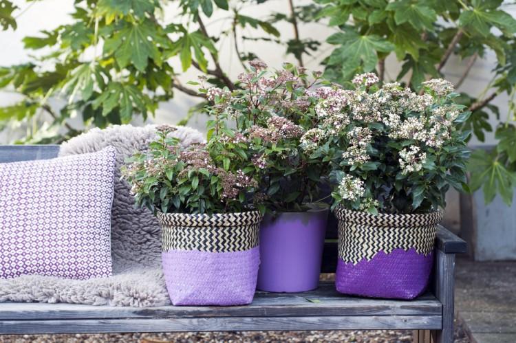 Tuinplant februari: Viburnum - PlantPlezier.nl