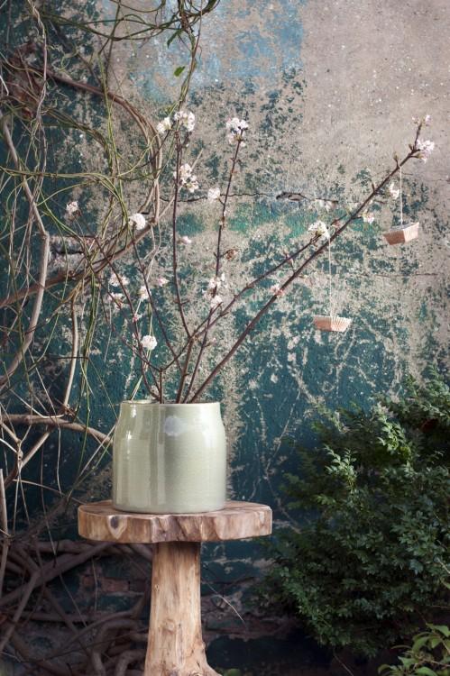 plant van de maand - plantplezier - februari - viburnum