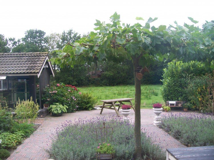 Anneke Riemersma - Trots op kruidentuin - plantplezier -