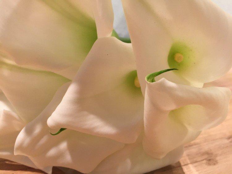 plantplezier - calla - zantedeschia - ivo