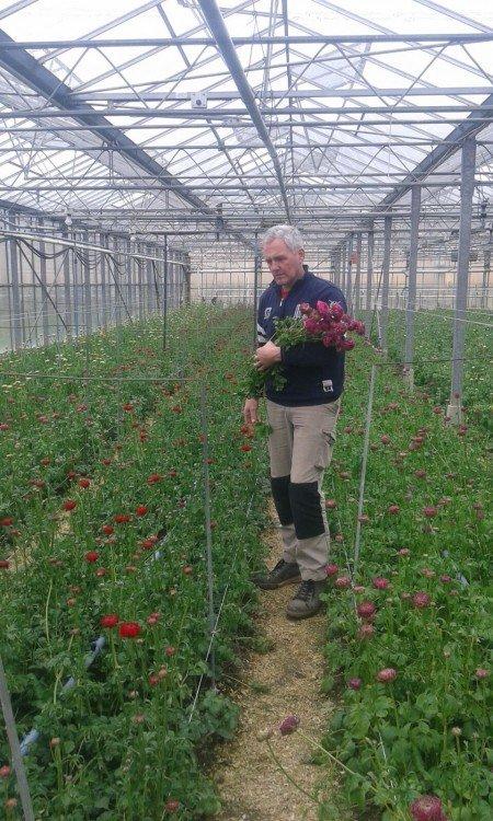 glazen tulp - plantplezier - flora holland - snijbloemen