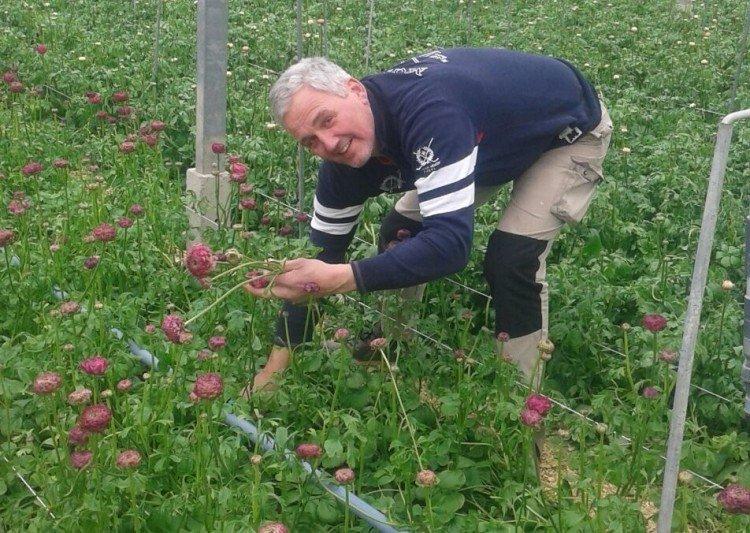 De Glazen Tulp -categorie snijbloemen- - PlantPlezier.nl