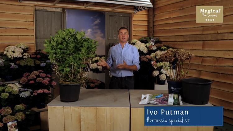 plantplezier - ivo putman - magical hortensia