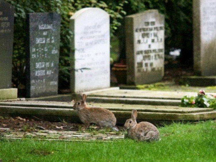 Welke bodembedekkers worden niet door konijnen gegeten? - PlantPlezier.nl