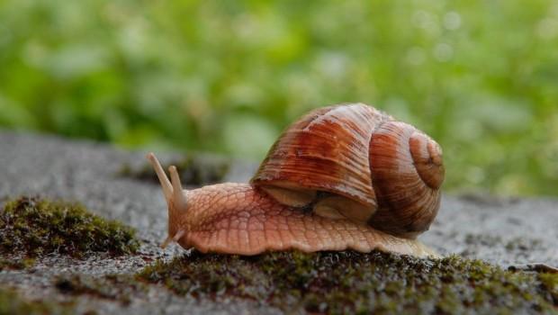 Slakkenplaag voorkomen - PlantPlezier.nl