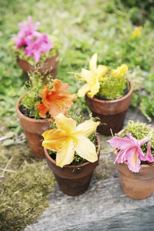 tuinplant - maart - plantplezier - azalea