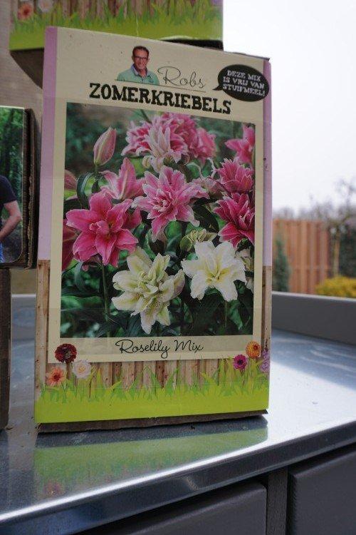 rooslelie - baltus - plantplezier - mix