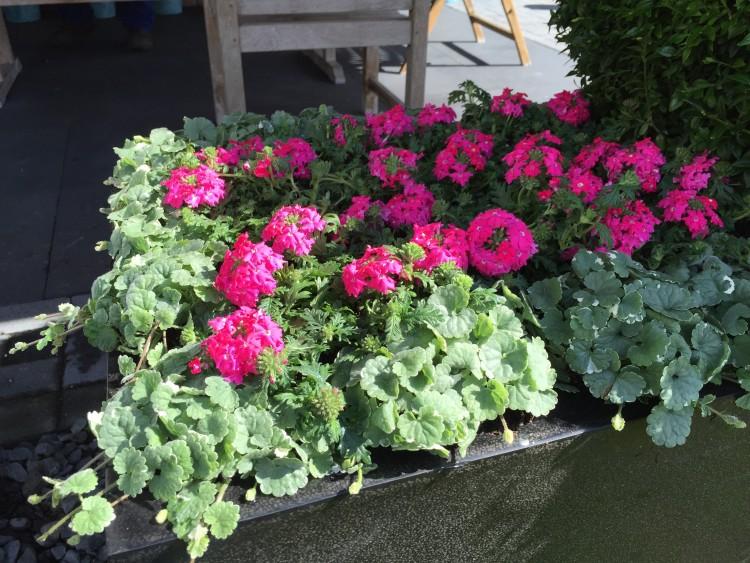 plantplezier - tuinbloeiers - ivo