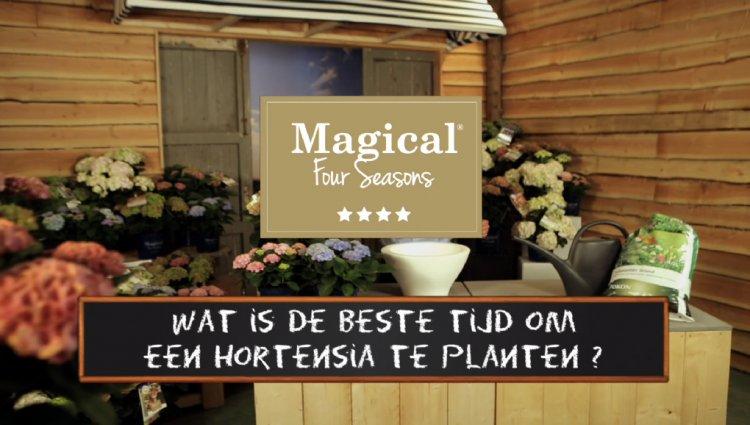 Magicals planten - PlantPlezier.nl