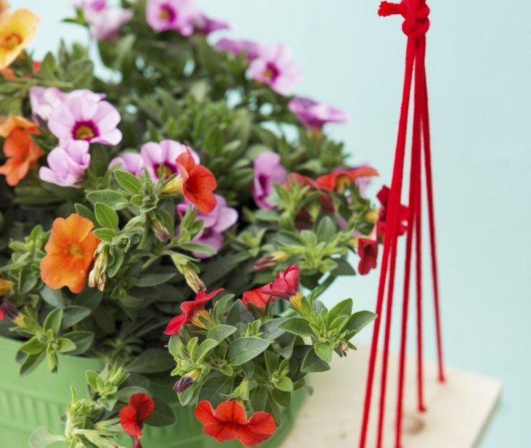 Tuinplant april: mini-petunia - PlantPlezier.nl