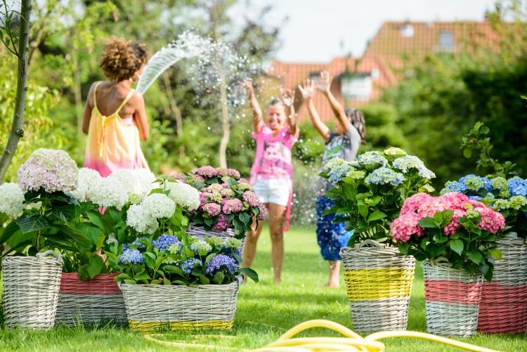plantplezier - hortensiaweek