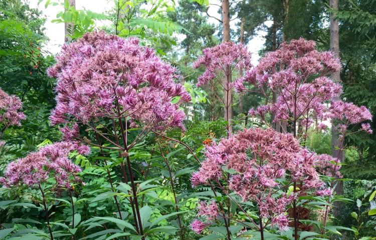 Plantplezier - Paul - trots op - bostuin