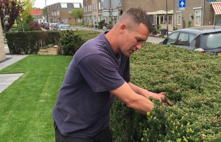 Coniferen snoeien - PlantPlezier.nl