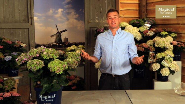 Verzorging Magical Hortensia - PlantPlezier.nl