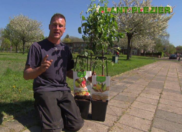 Familieappelboom Actie - PlantPlezier.nl